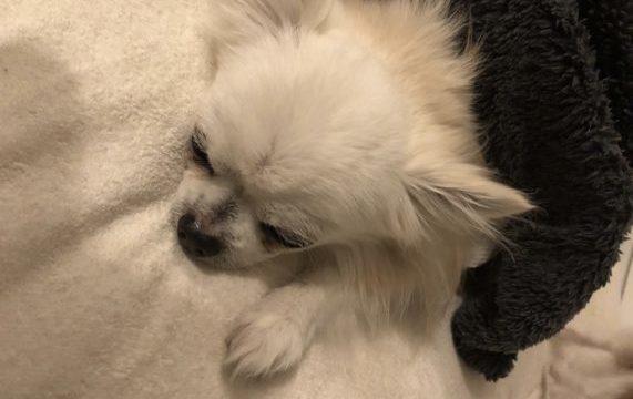 犬の腎臓病末期