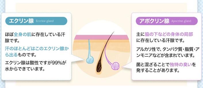 汗の仕組み