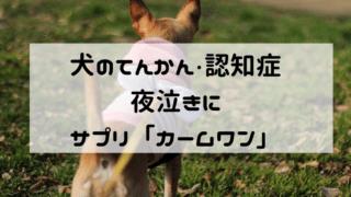 犬のてんかん 認知症 夜泣き