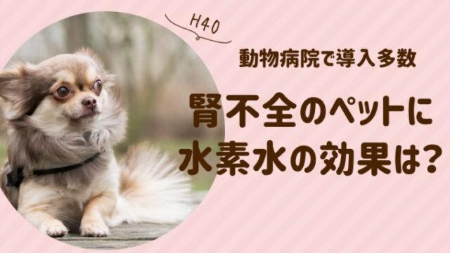 犬 腎不全 水素水 効果