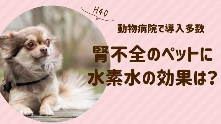 犬の腎不全に水素水は効果あり?獣医師おすすめの水素水や口コミ